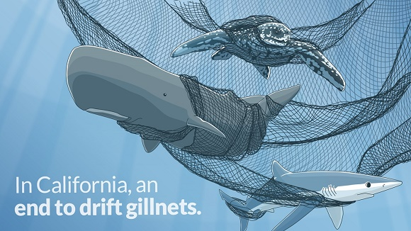 Ban Drift Gillnets Illustration